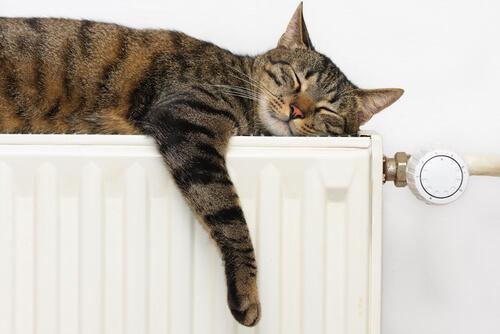 Um gato dormindo.