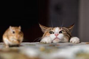 Roedores e gatos transmitem toxoplasmose.