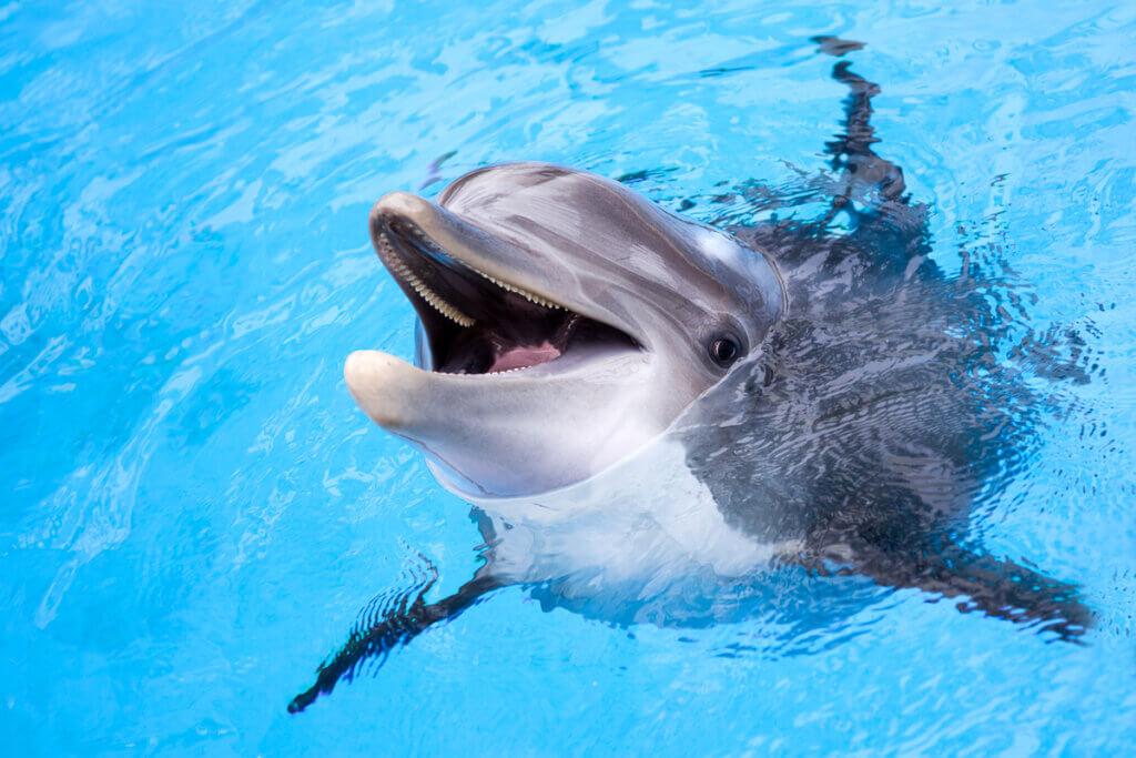 5 curiosidades dos golfinhos