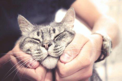 Tutor carinhoso com seu gato.