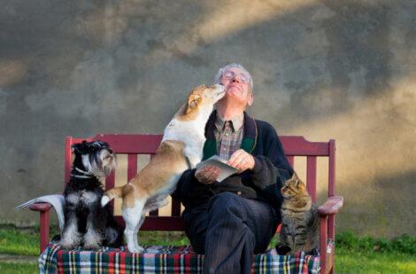 Os efeitos da terapia animal são quantificáveis.
