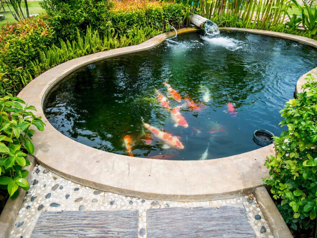 Como construir um lago de peixes?