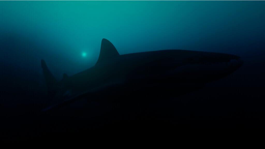 Foi encontrado o maior tubarão luminoso do mundo