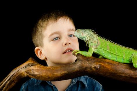 Uma criança admirando um réptil.