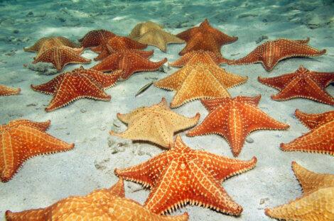 Grupo de estrelas-do-mar.
