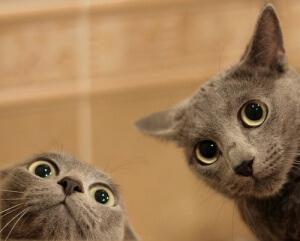 Visão: um dos sentidos dos gatos