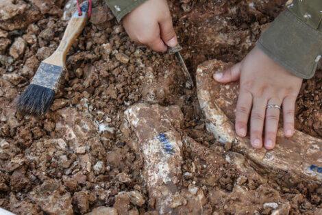 Um paleontólogo descobre um osso.