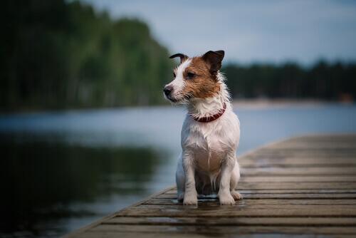 Morre Pancho, o cão mais famoso da televisão espanhola