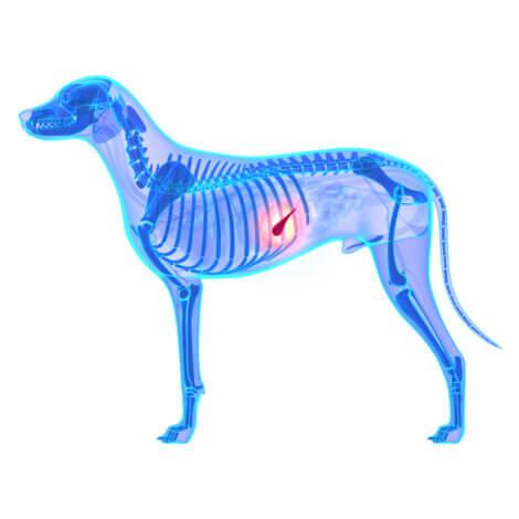 Insuficiência pancreática exócrina em animais de estimação.