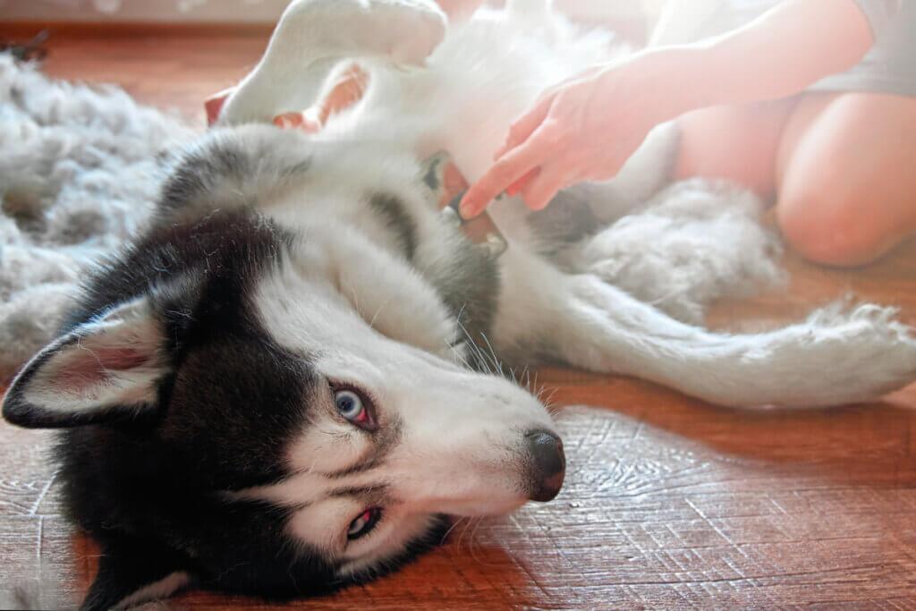 Problemas digestivos em cães: sintomas e causas