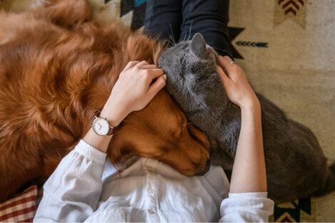 Exemplo de convivência entre cães e gatos.