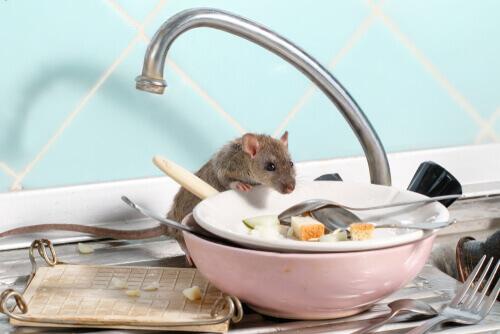 Doenças transmitidas por roedores