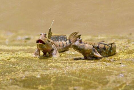 Os primeiros animais a andar na terra.