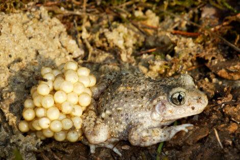 Os tipos de reprodução em animais são variados.