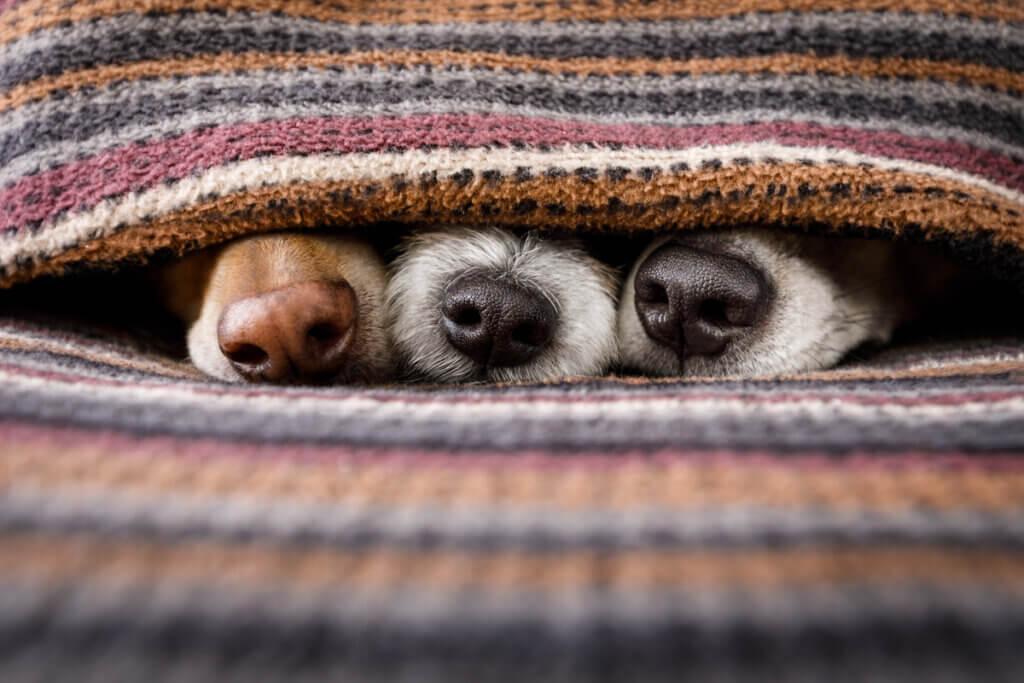 Quatro brincadeiras para estimular o olfato em cães