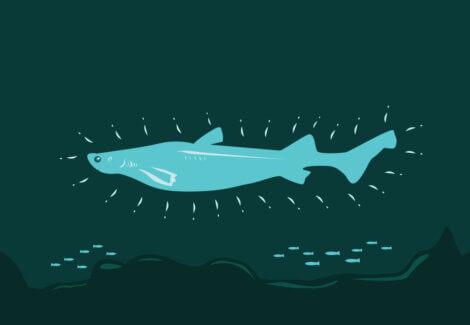 O desenho de um tubarão luminoso.