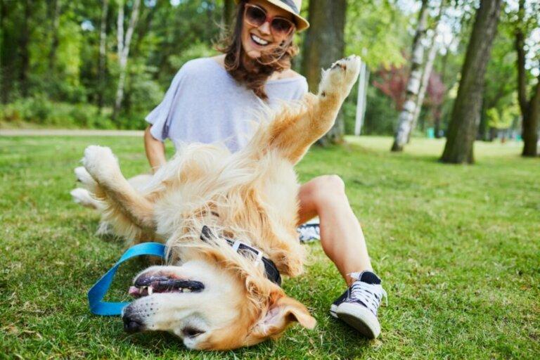 Por que os cães gostam tanto de carinho na barriga?