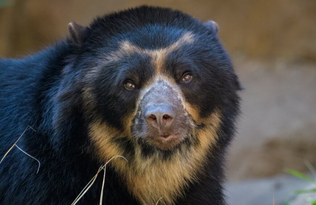 8 animais em perigo de extinção no Equador