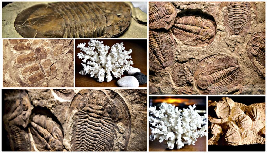 4 tipos de fósseis e suas características