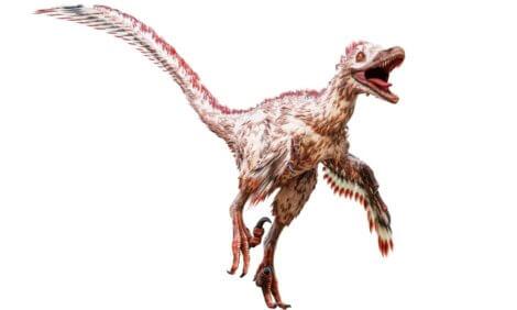 Um velociraptor em um fundo branco.