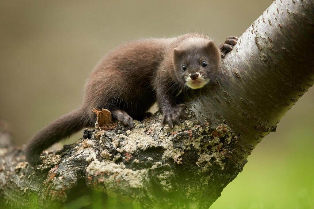 6 animais em perigo de extinção na Europa