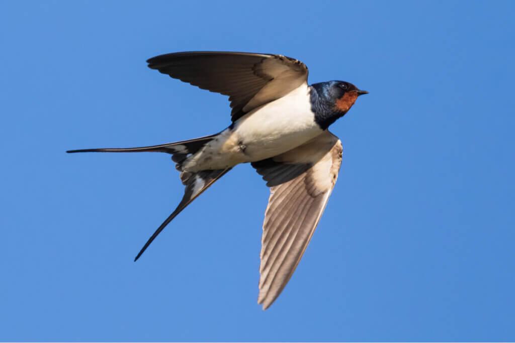 6 espécies de animais migratórios