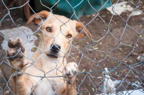 Cães sem lar se multiplicam ao longo dos anos.