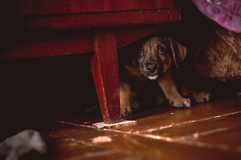 O que fazer se meu cachorro tiver medo de mim?