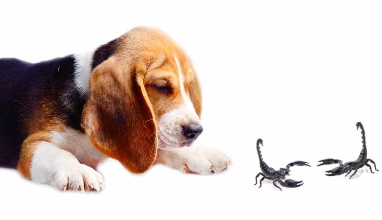 Do que os cães têm medo?
