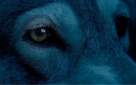 Você sabe do que os cães têm medo?