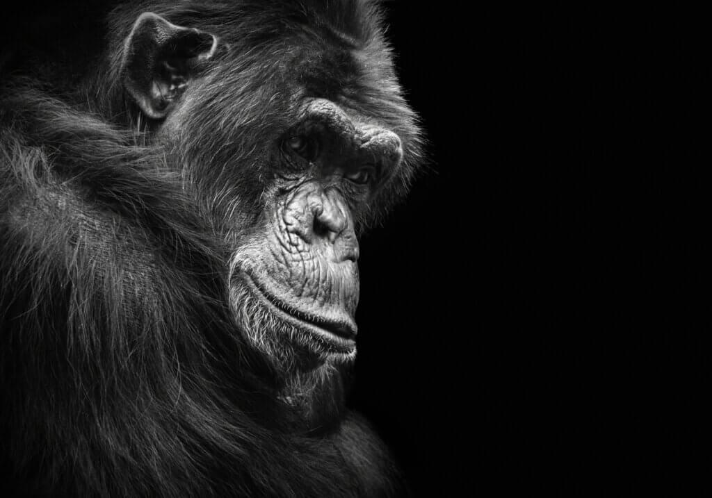Por que os animais ficam deprimidos?