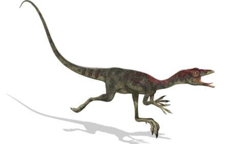 Um Compsognathus em fundo branco.