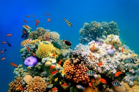 Um exemplo de um tipo de recife de coral.