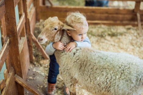 Criança abraçando uma ovelha.