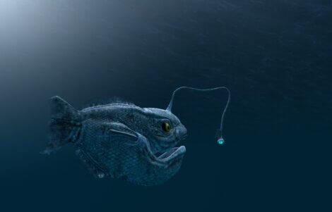Os peixes do fundo do mar têm formas muito estranhas.