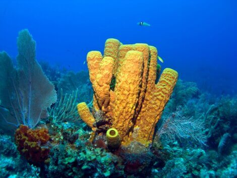 Um dos animais marinhos que eliminam vírus.