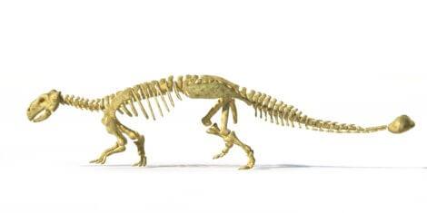 Um dos dinossauros da Europa.