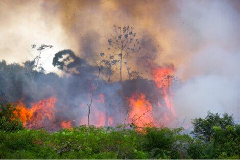 Uma floresta em chamas de um incêndio.