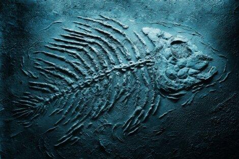 Um fóssil azul de um peixe.