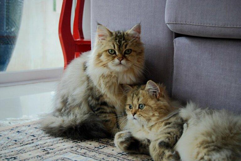 5 dicas para melhorar a convivência de vários gatos em casa