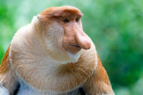 Um dos tipos de mamíferos placentários.