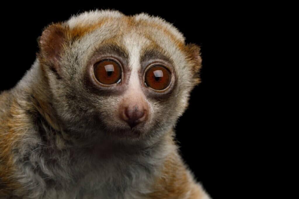 5 curiosidades sobre mamíferos