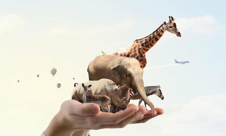 5 ações que contribuem para a proteção dos animais e do planeta