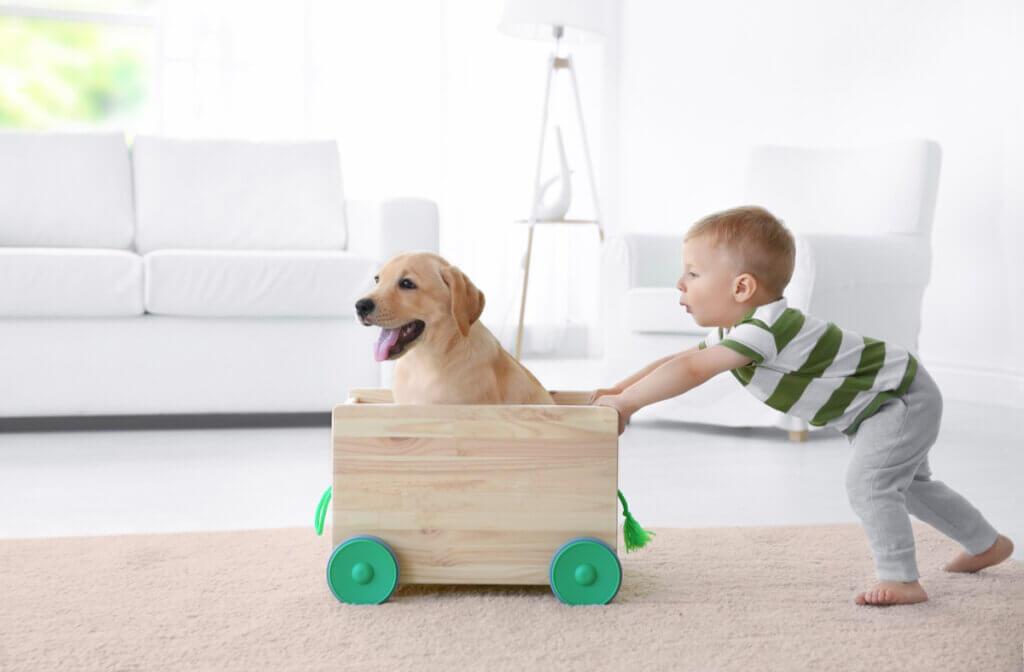Brinquedos feitos com materiais reciclados para animais de estimação