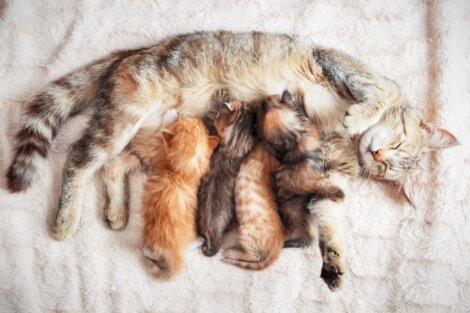 Uma ninhada de gatos.