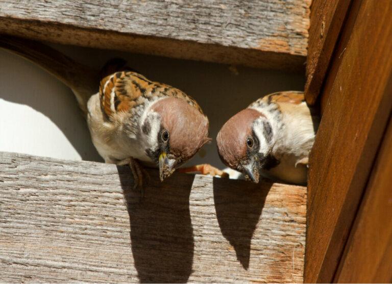 Como espantar os pássaros?