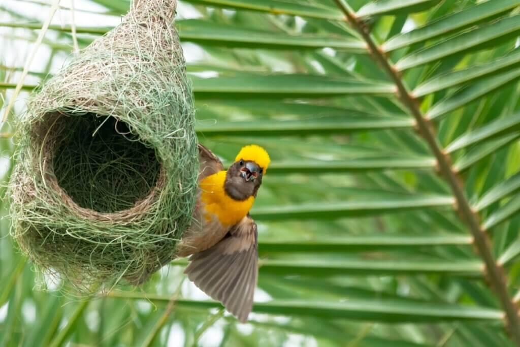 6 animais que constroem suas próprias casas