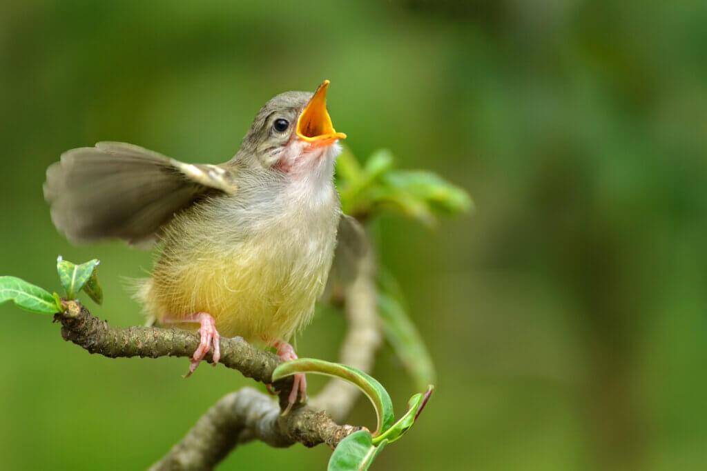 4 tipos de comunicação entre animais