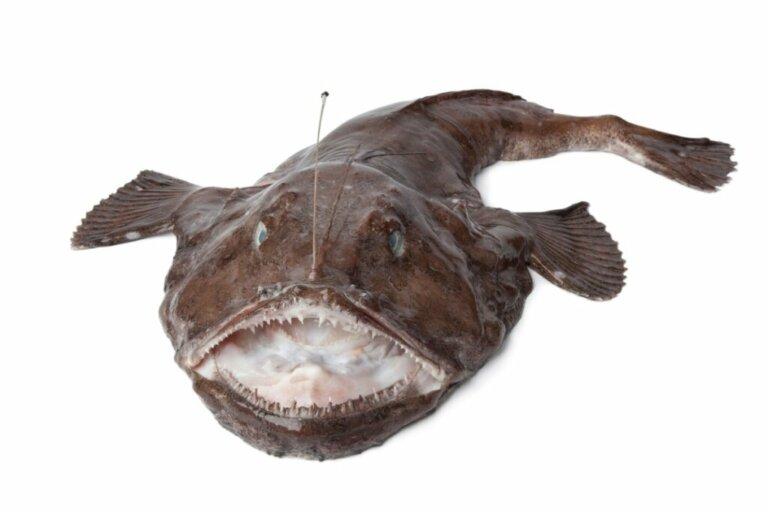 Peixes abissais, incríveis criaturas marinhas