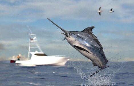 Um dos peixes mais rápidos do mundo.